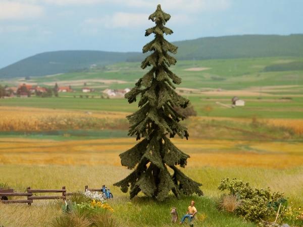 Noch 21922 - Spruce Tree