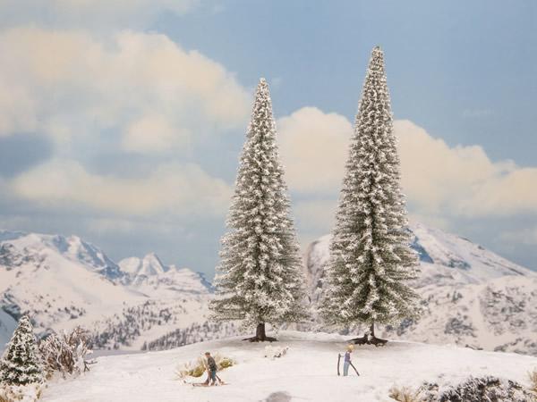Noch 21966 - Snowy Fir Trees