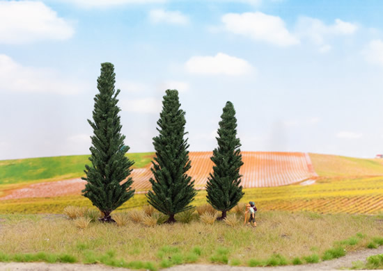 Noch 21998 - Cypresses