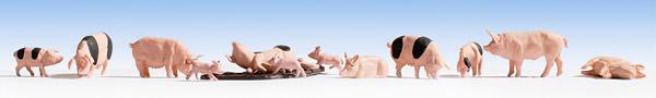 Noch 36712 - Pigs