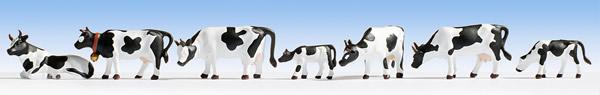 Noch 36721 - Cows, black-white