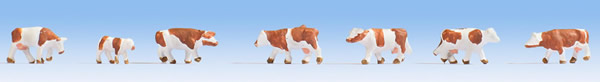 Noch 44251 - Cows, brown-white