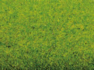Grass Mat Spring Meadow, 200 x 100 cm