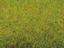 Grass Mat Summer Meadow, 200 x 100 cm