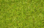 Master Grass Blend Summer Meadow, 2,5 - 6 mm
