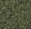 Scatter Grass Marshy Soil